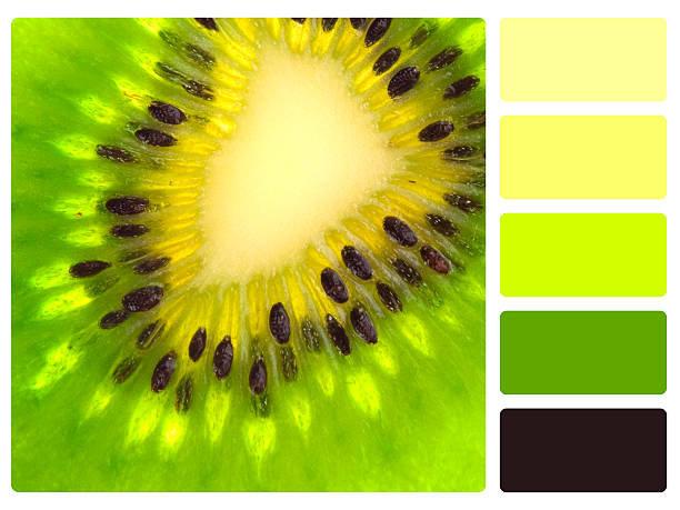 сочетание цветов из природы