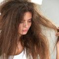 Как увлажнить сухие волосы: средства и народные рецепты