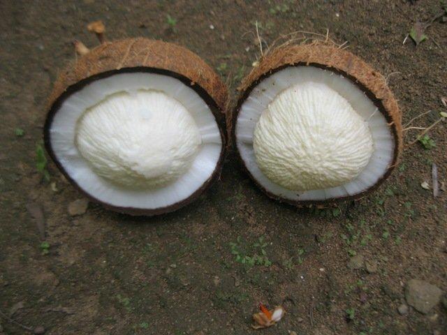 Добыча Cocamide Mea из кокосового масла